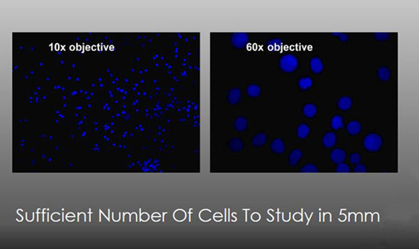 Sufficient # of Cells